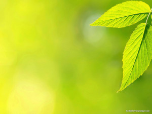 green leaves background hd