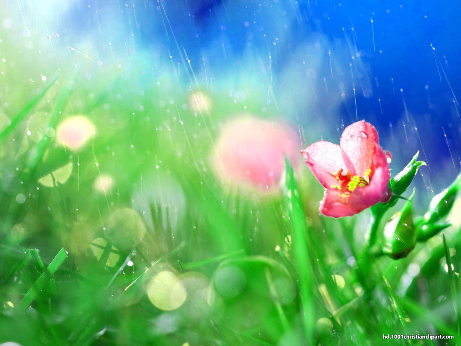 rain flower background