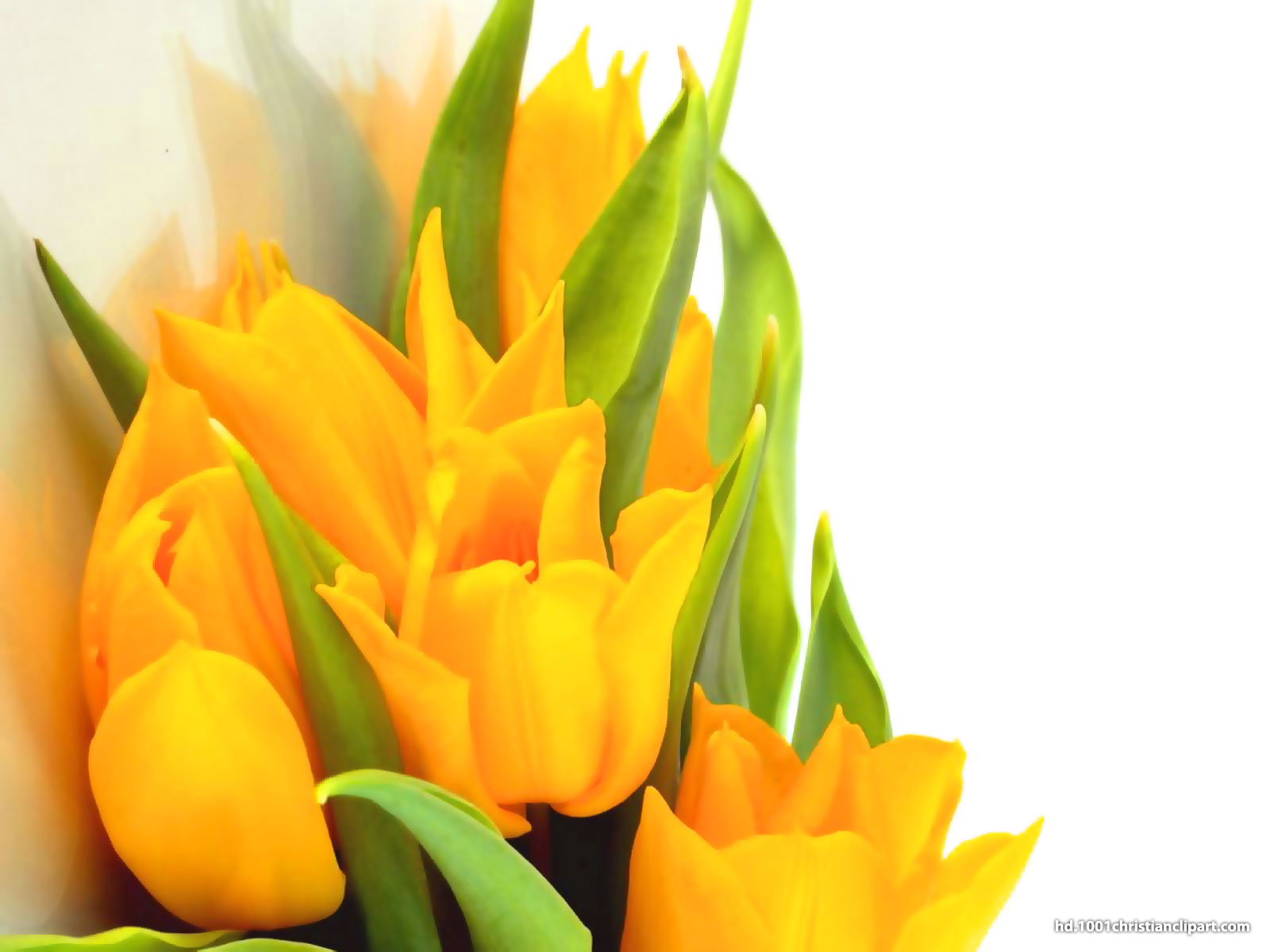 yellow flower background hd