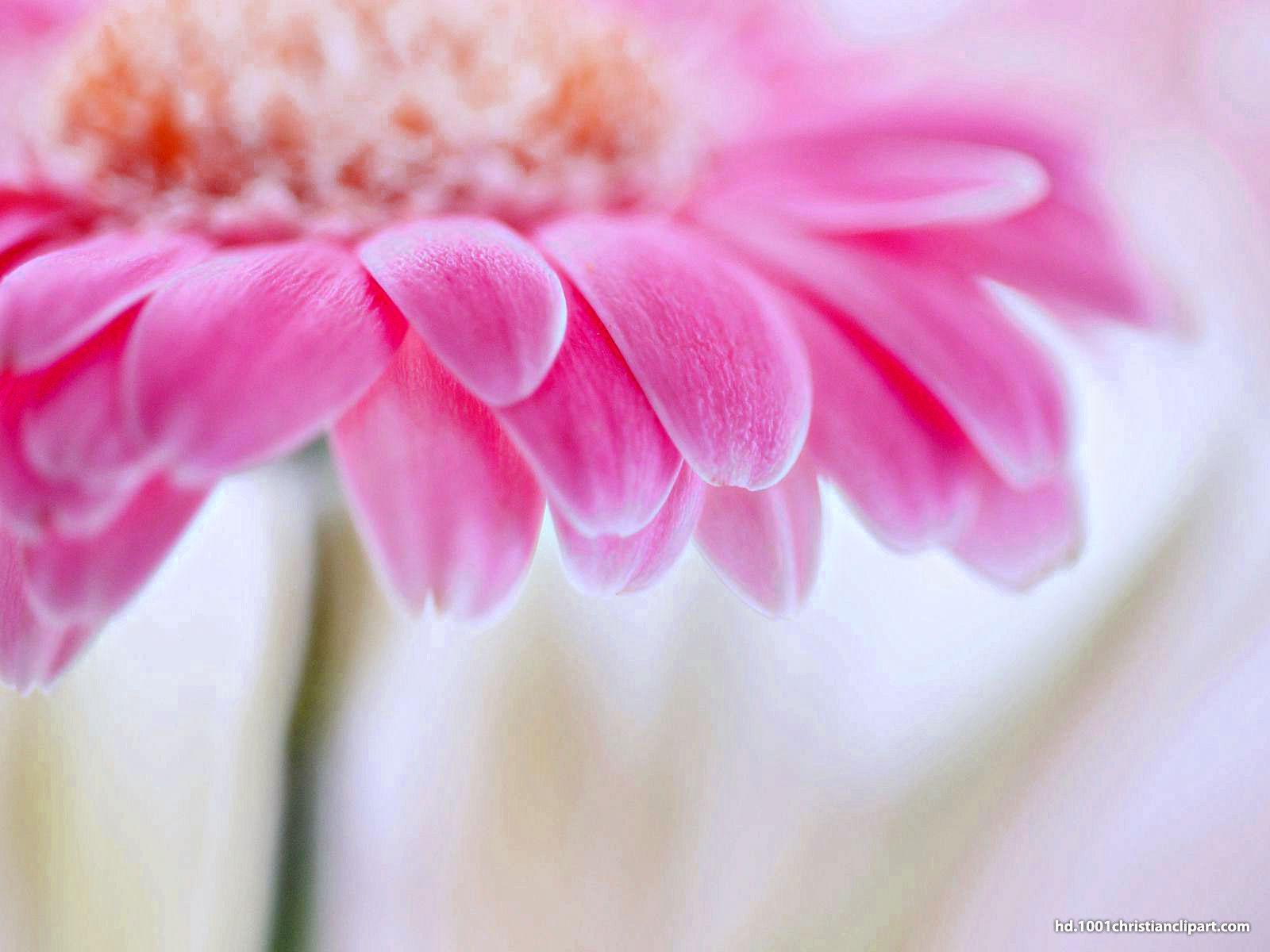 flower background hd
