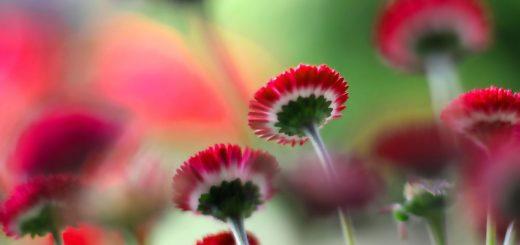 flower hd background