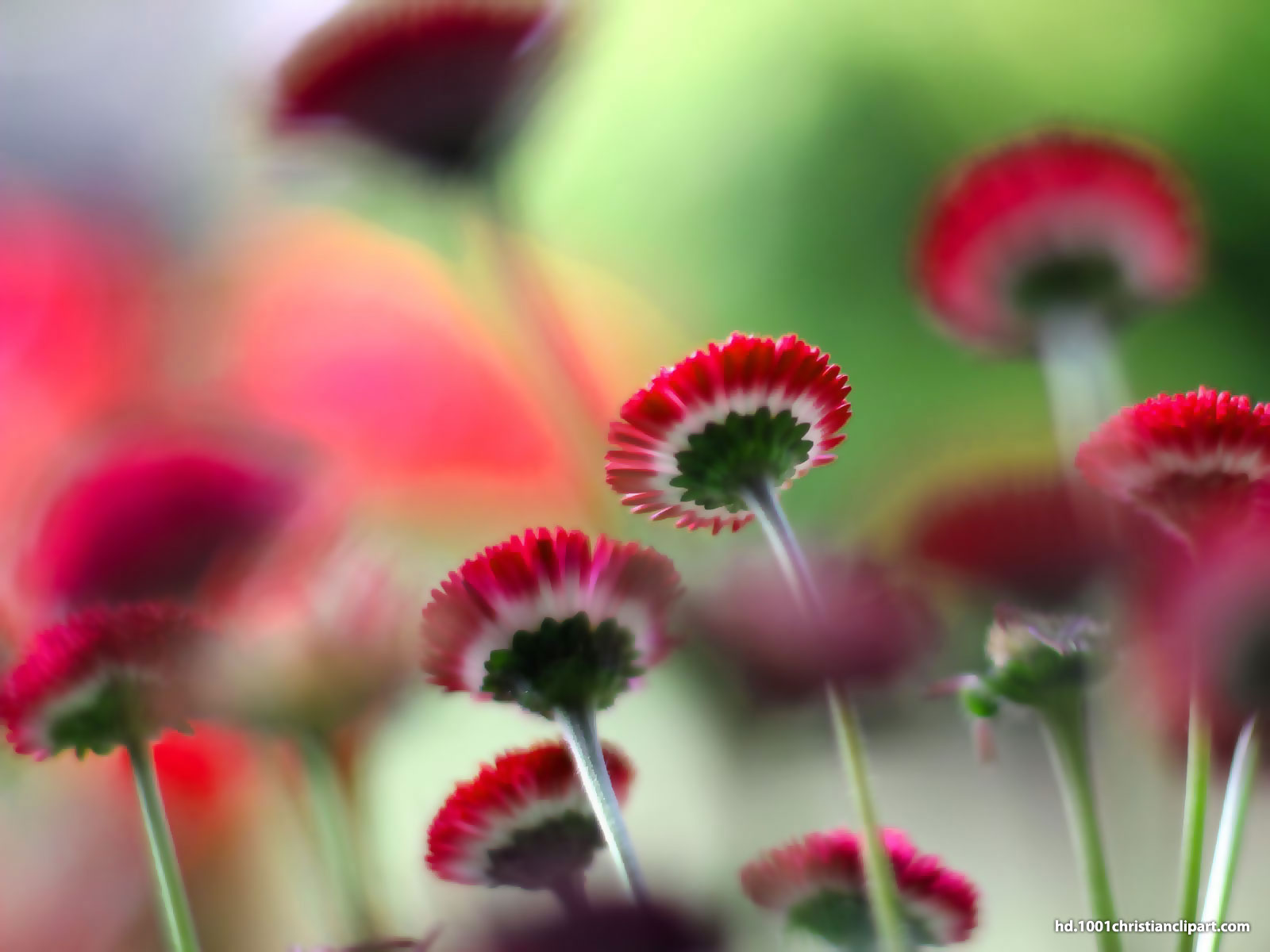 Flower HD Background – HD Slide Backgrounds