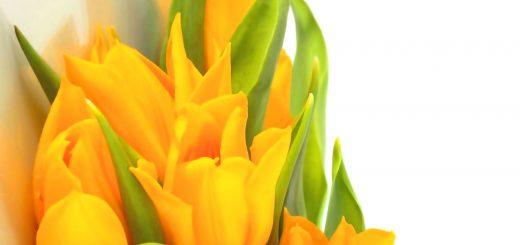 yellow flower background hd