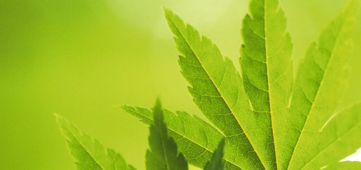 high-quality-green-leaves-powerpoint-background